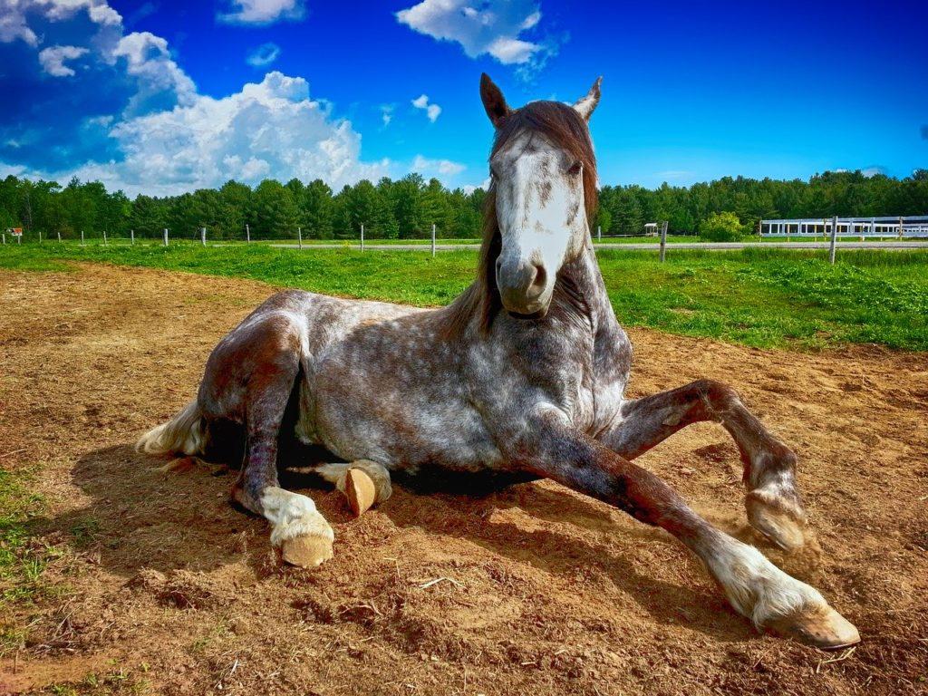 horse, countryside, farm
