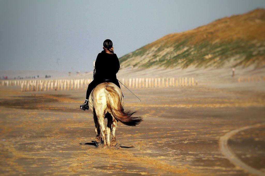horse, horsewoman, beach